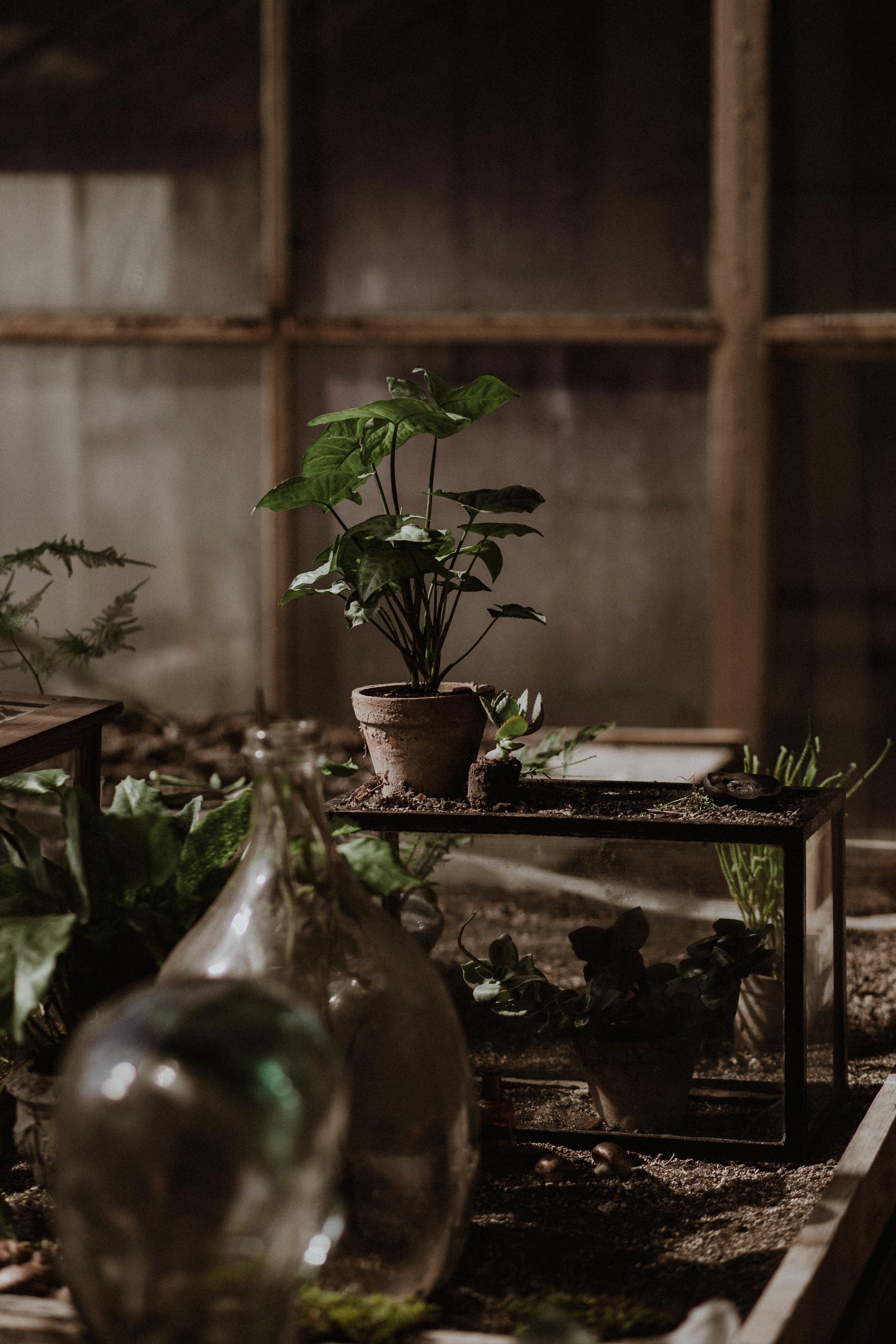 20170321_greenhouse_stsh_w_035__MG_5999.jpg