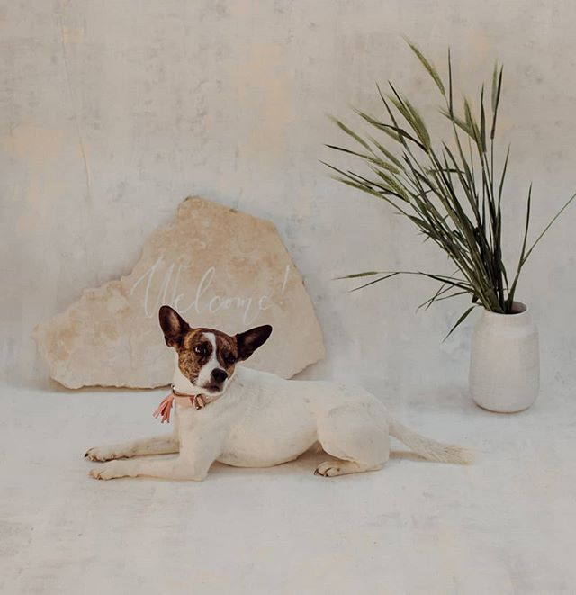 Hello Mása! 😍  Photo: Orsi  #barefootteam #pastel #barefootweddingstyle #weddingdog #welcome #mood #weddingboard #welcomeweddingsign #doglove #dog #dogwedding #weddinggraphics #budapestwedding #mik #ikozosseg #tellon #lookslikefilm #livefolk #vsco #vscohun #vscomood #heyheyhellomay #greenweddingshoes #junebugweddings #dirtybootsandmessyhair #theweddinglegends #loveandwildhearts #lifeofadventure #adventurouswedding #provencewedding @provenceweddingrackeve