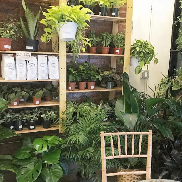 ...just our lil #oasis in the middle of #brooklyn aka the #bestofbothworlds 🍃🏙🍃 #happytuesday, everybunny! stop in and say *hi*, we're open til 5!