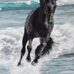 Can your plot go as fast the Black Stallion? NO.  No one is faster than the Black.