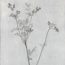 meadowsweet1 copy.jpg