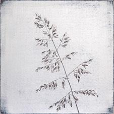 tallgrass226x226.jpg