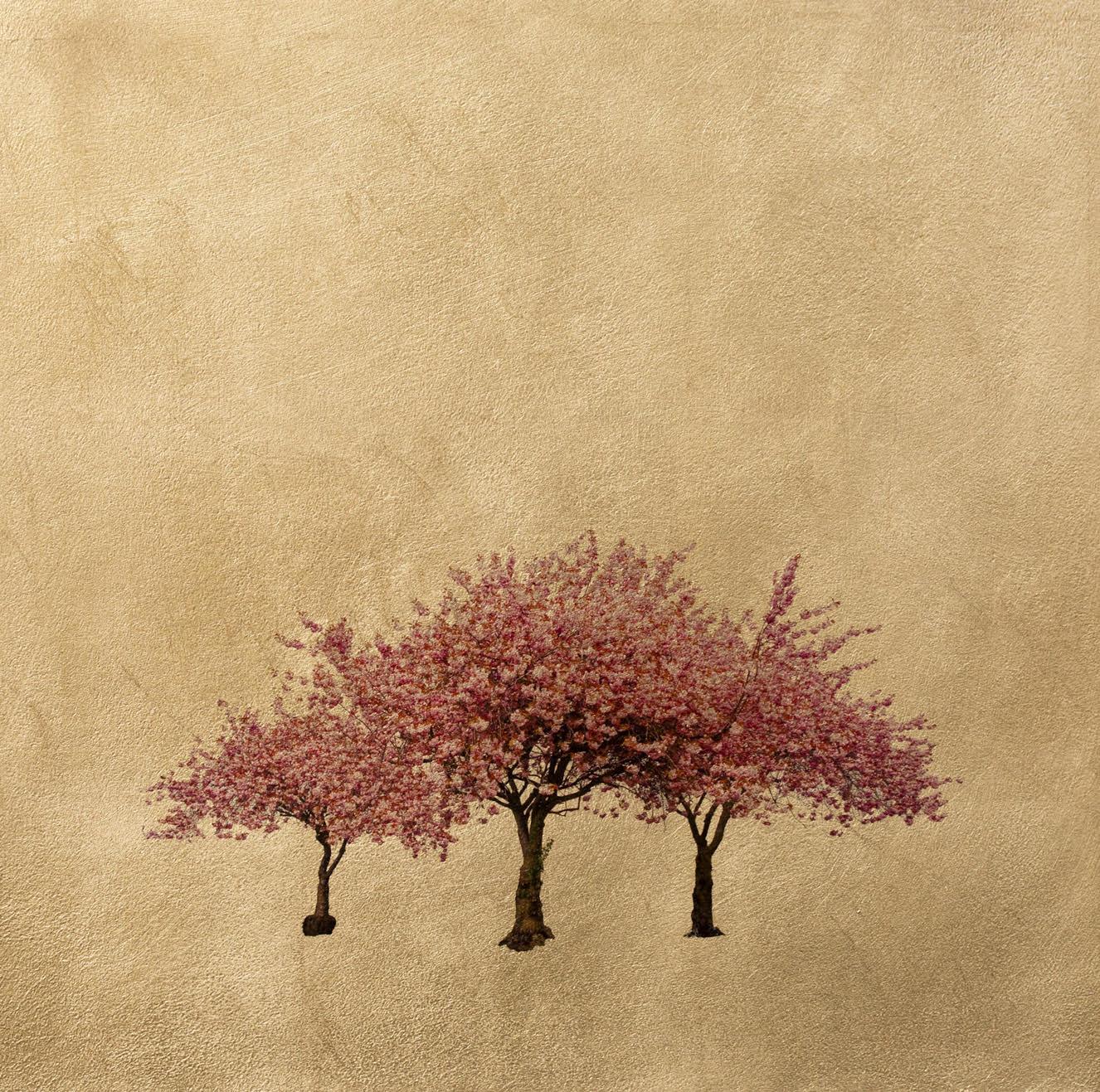 Prunus Serrulata by Robert Pereira Hind