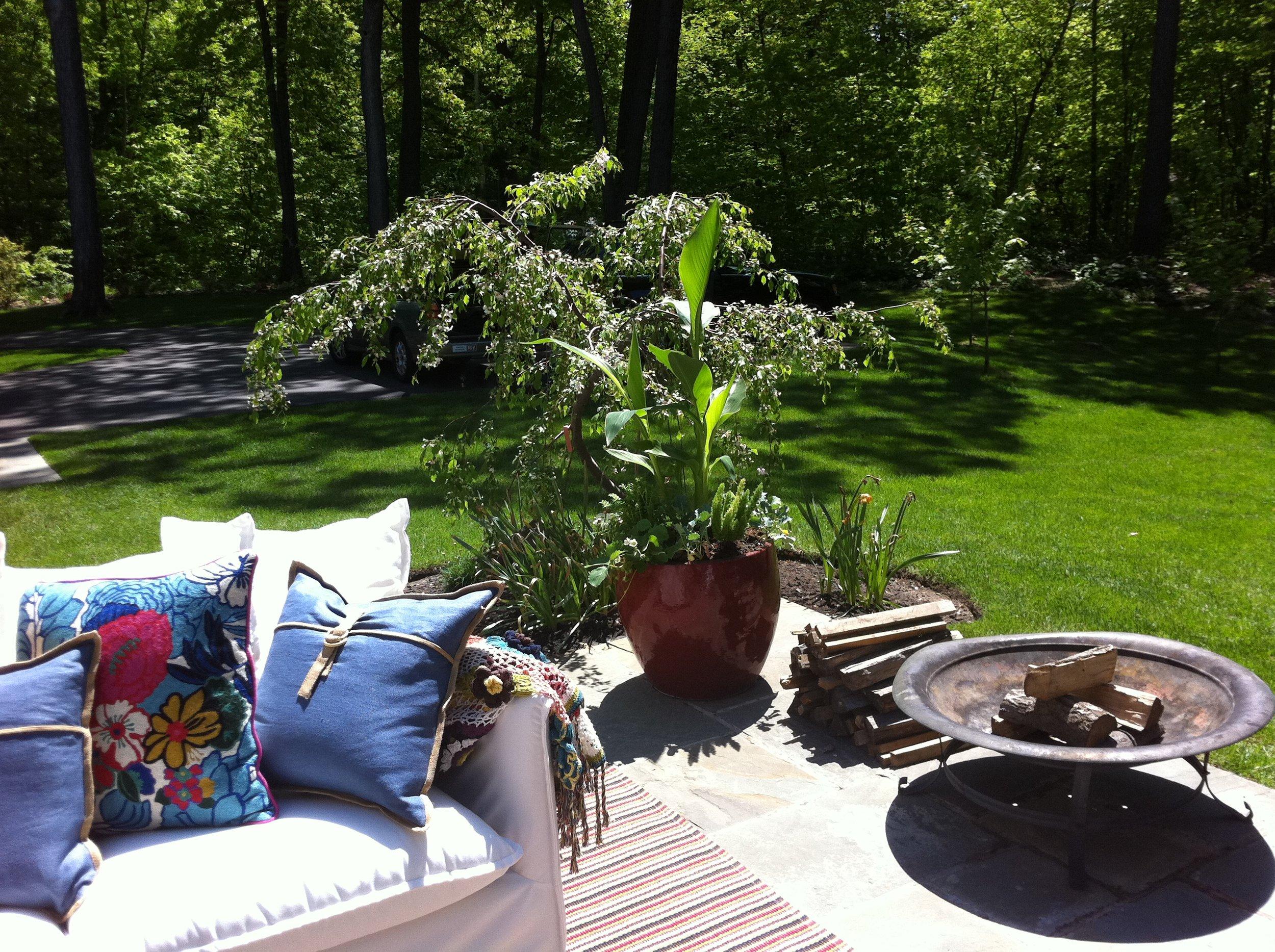 Healing Louisa Tree.JPG