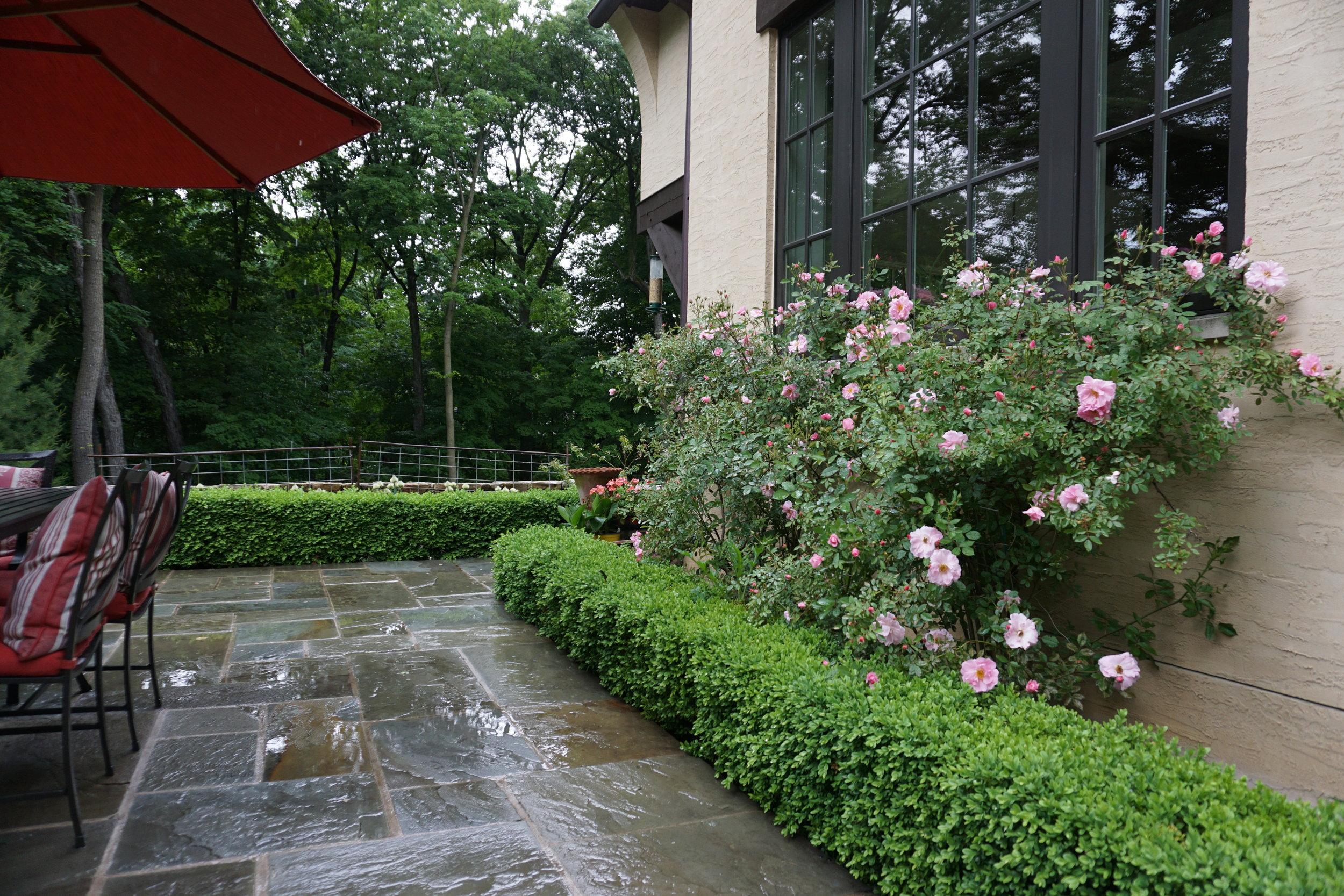 Window Rose.JPG