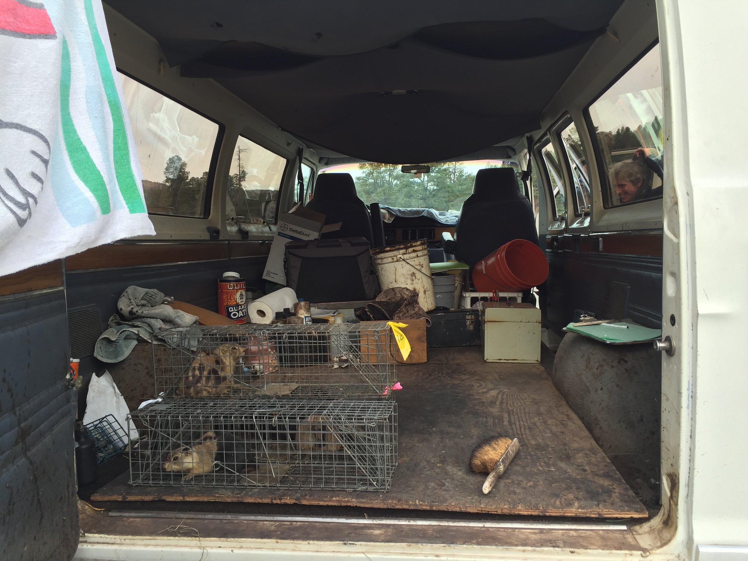Trapped prairie dogs wait in the marking van for handling.  ©MRR 2016