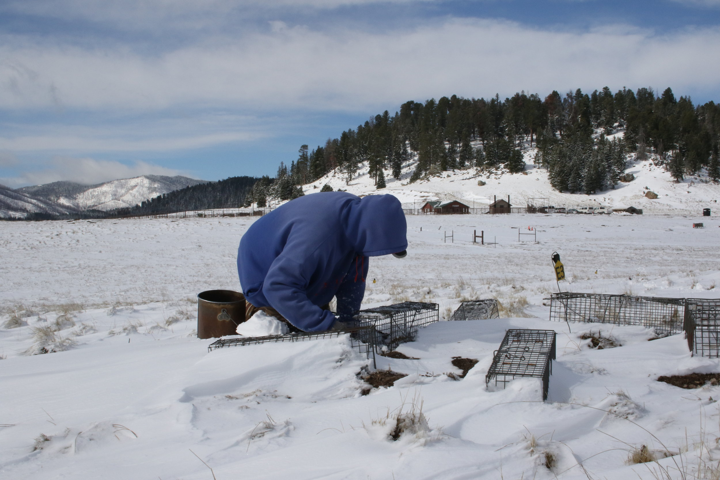 John clears snow from a spread trap set and adds bait.  ©MRR 2017