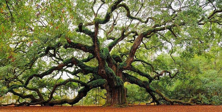 oaks-of-righteousness.jpg