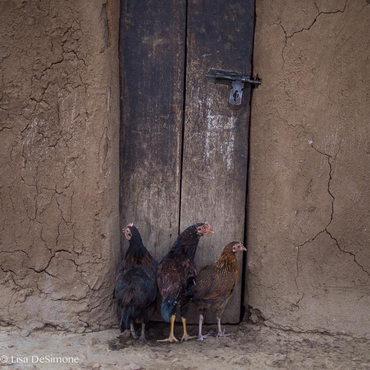 kenya color Maasai village-6.jpg