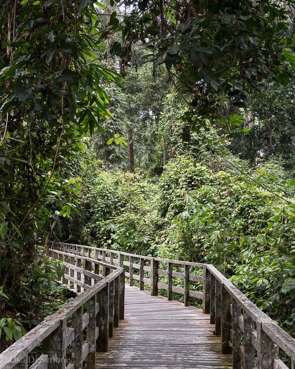 Borneo-2.jpg