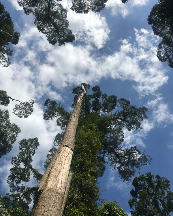 Borneo-4.jpg