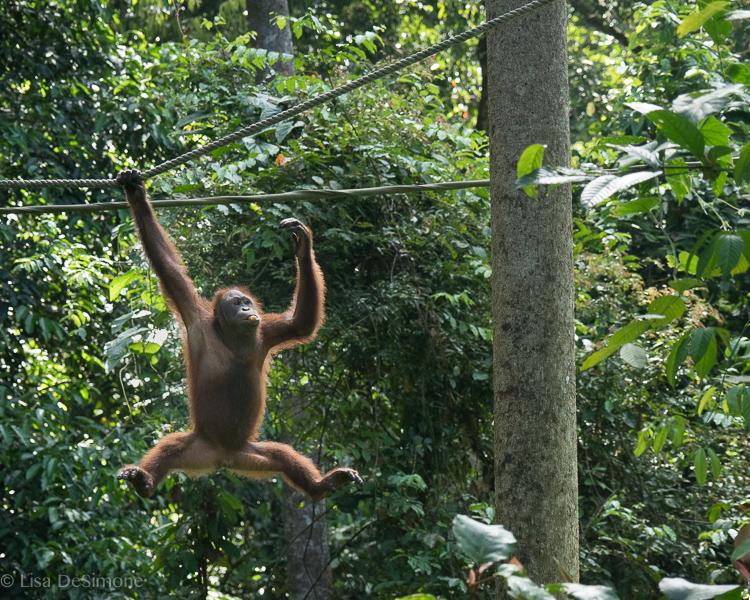 Borneo-8.jpg