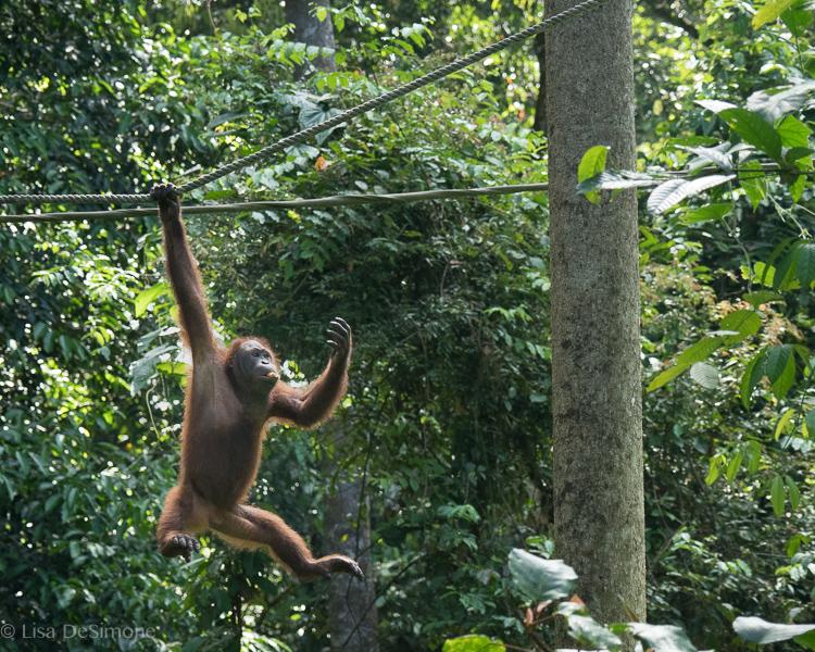 Borneo-7.jpg