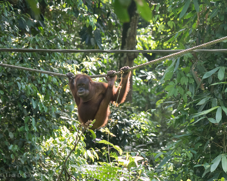 Borneo-6.jpg