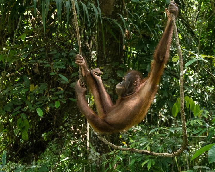 Borneo-21.jpg