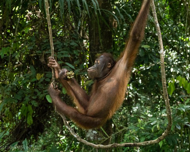Borneo-20.jpg