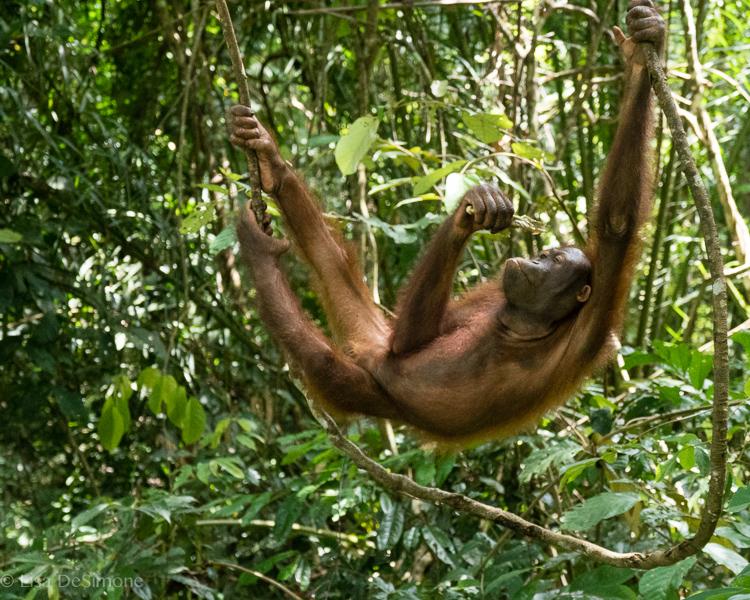 Borneo-19.jpg
