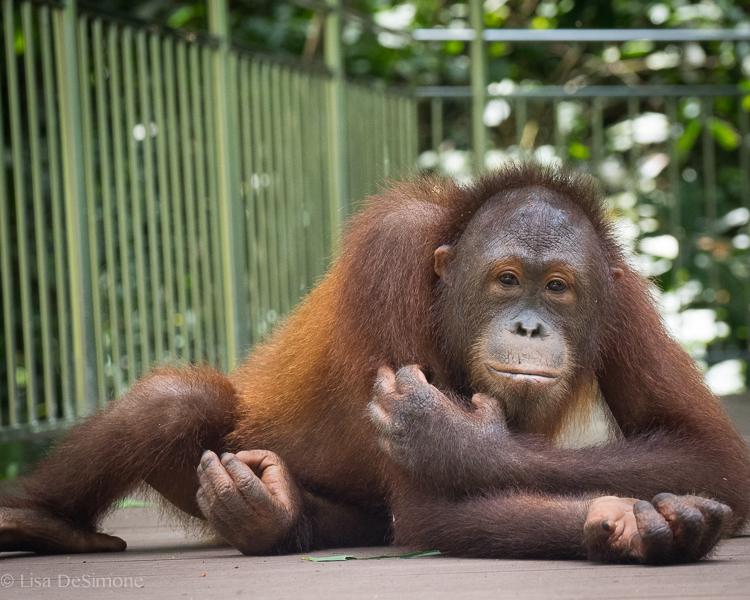 Borneo-17.jpg