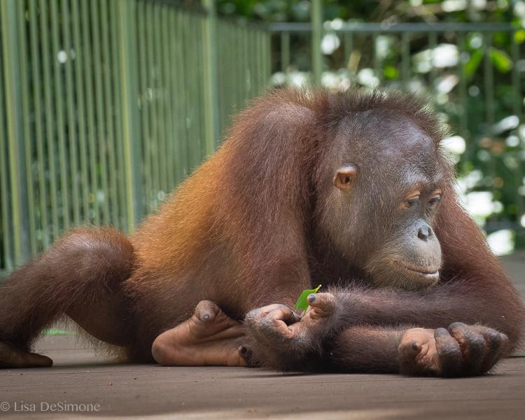 Borneo-16.jpg