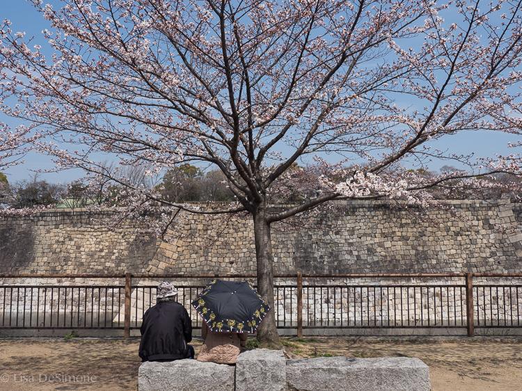 A couple quietly enjoying sakura in Japan.