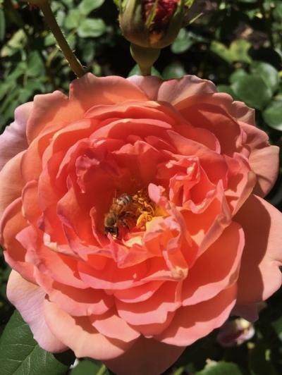 Open open open like a blossoming flower