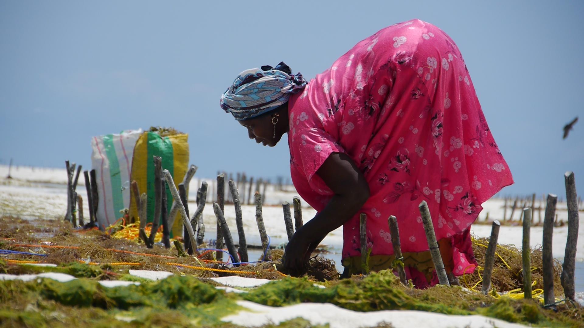 A seaweed farmer in Zanzibar (Photo: IIED, which supports the Zanzibar Climate Change Alliance)