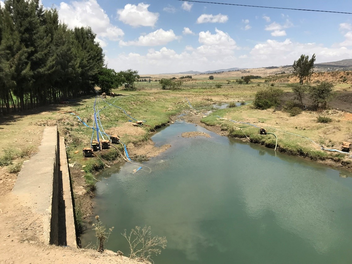 A pond filled by a nearby dam supplies water for farmer-installed irrigation pumps.