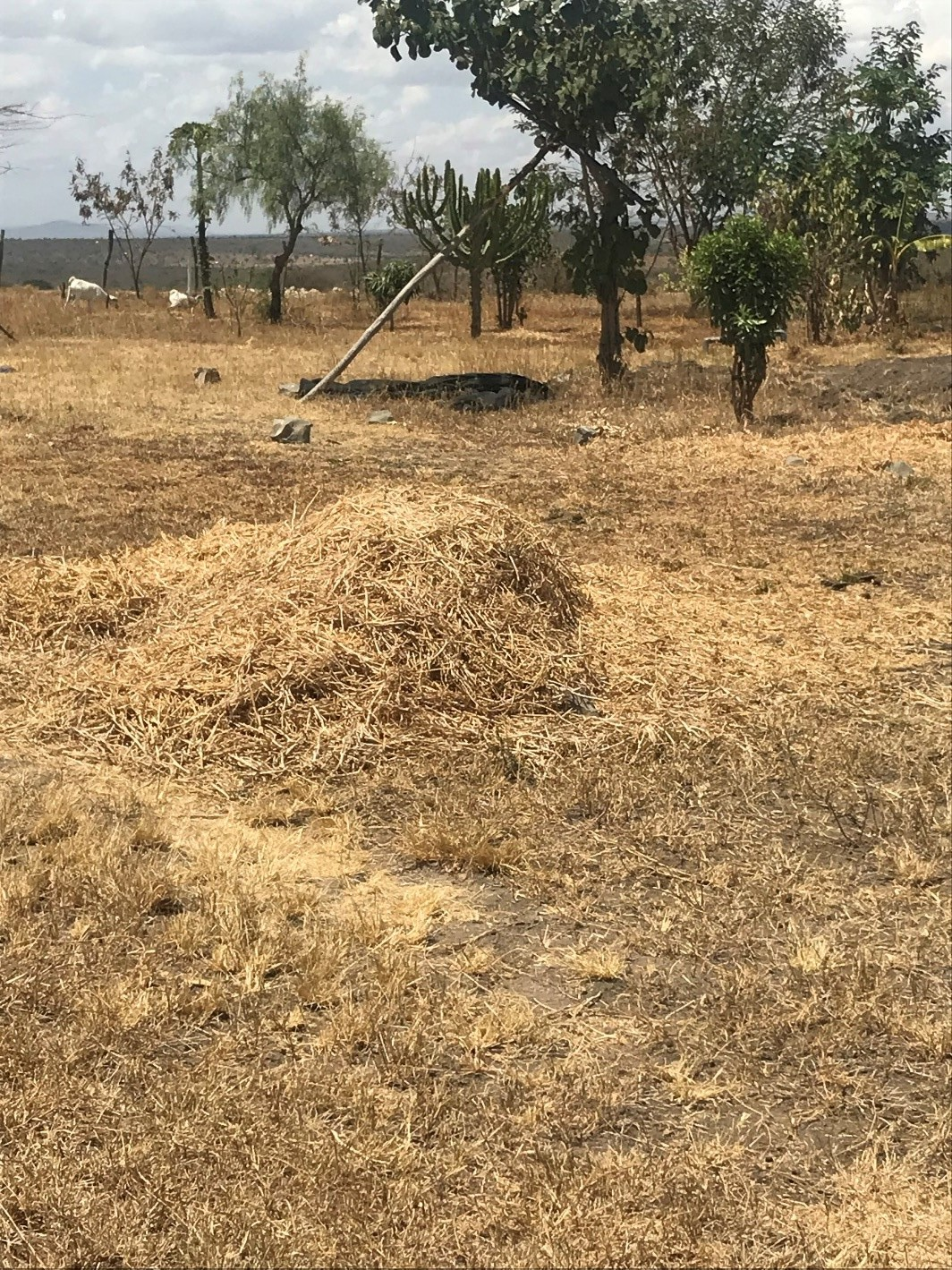 Freshly ground animal feed will nourish the community's livestock during the dry season.