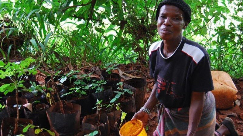 Farmer tending her nursery, Cameroon (Photo: AWDF)