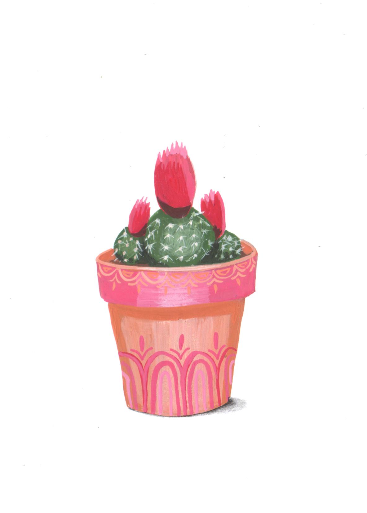 cactuspink.jpg