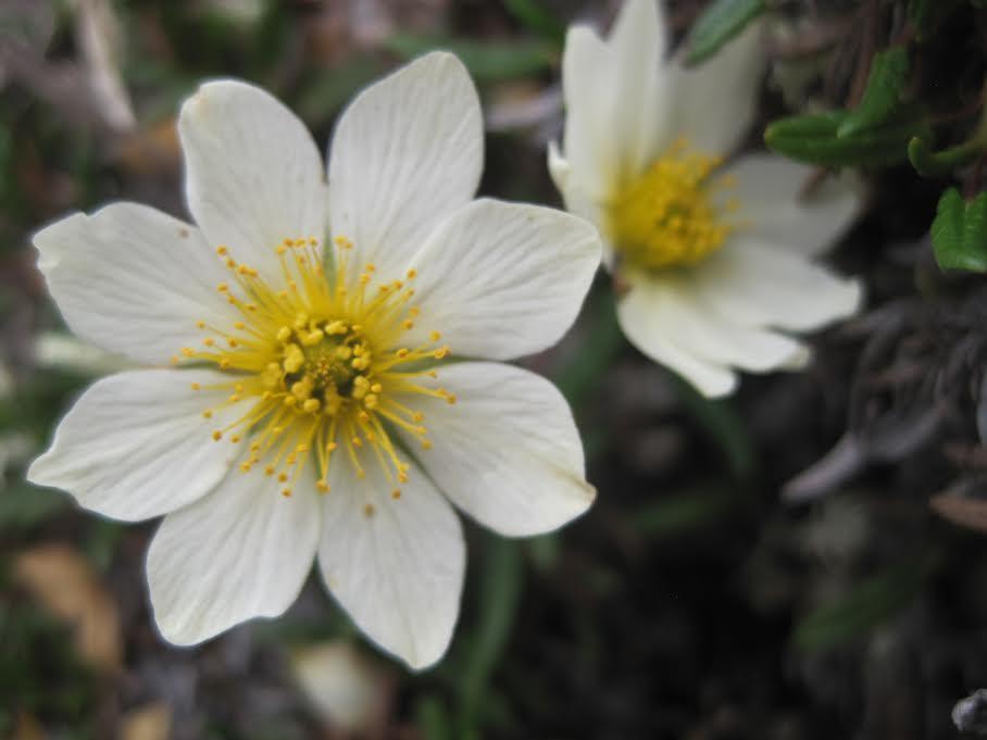 Wildflower 1.jpg