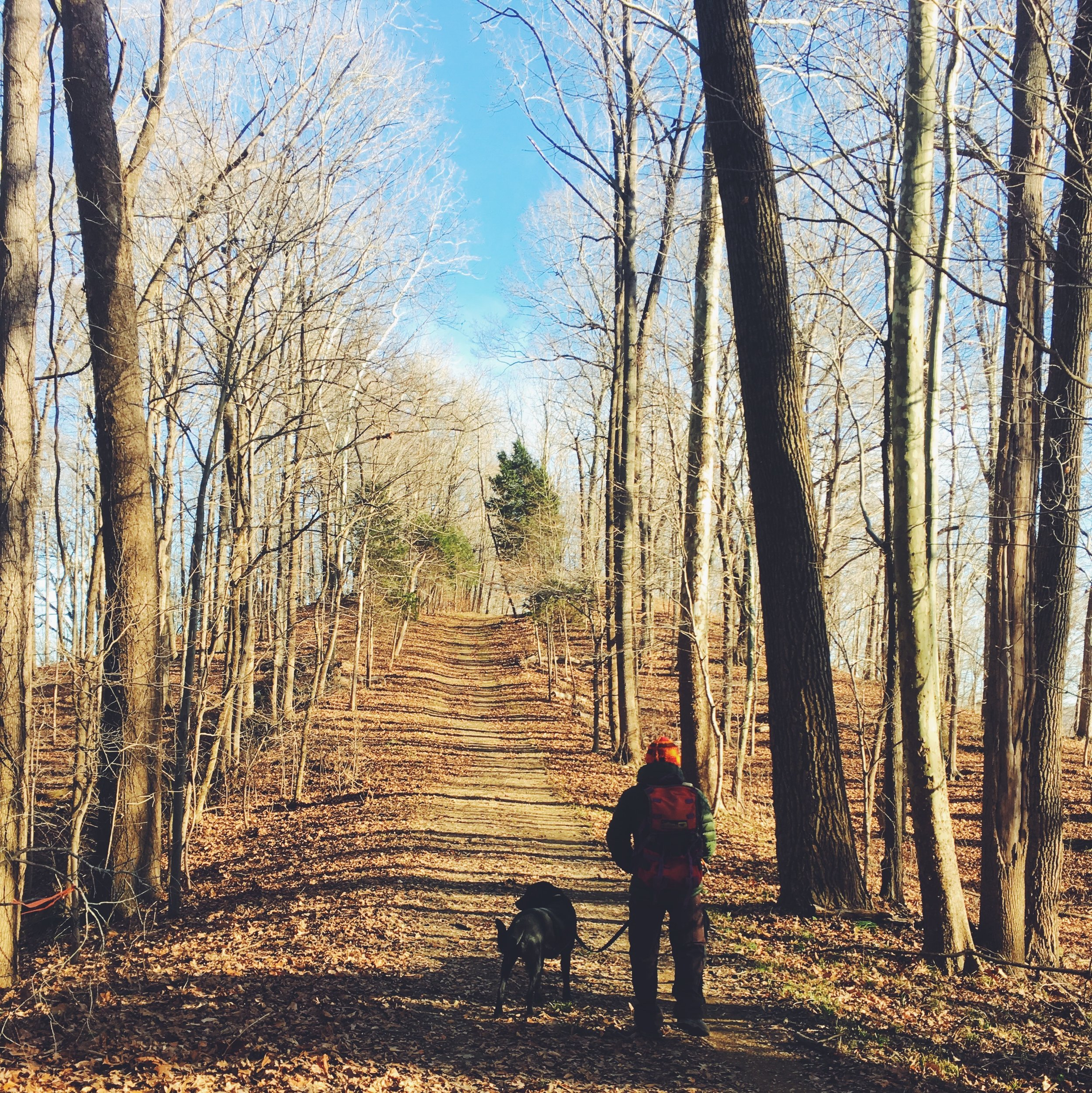 hiking in the hoosier national forest