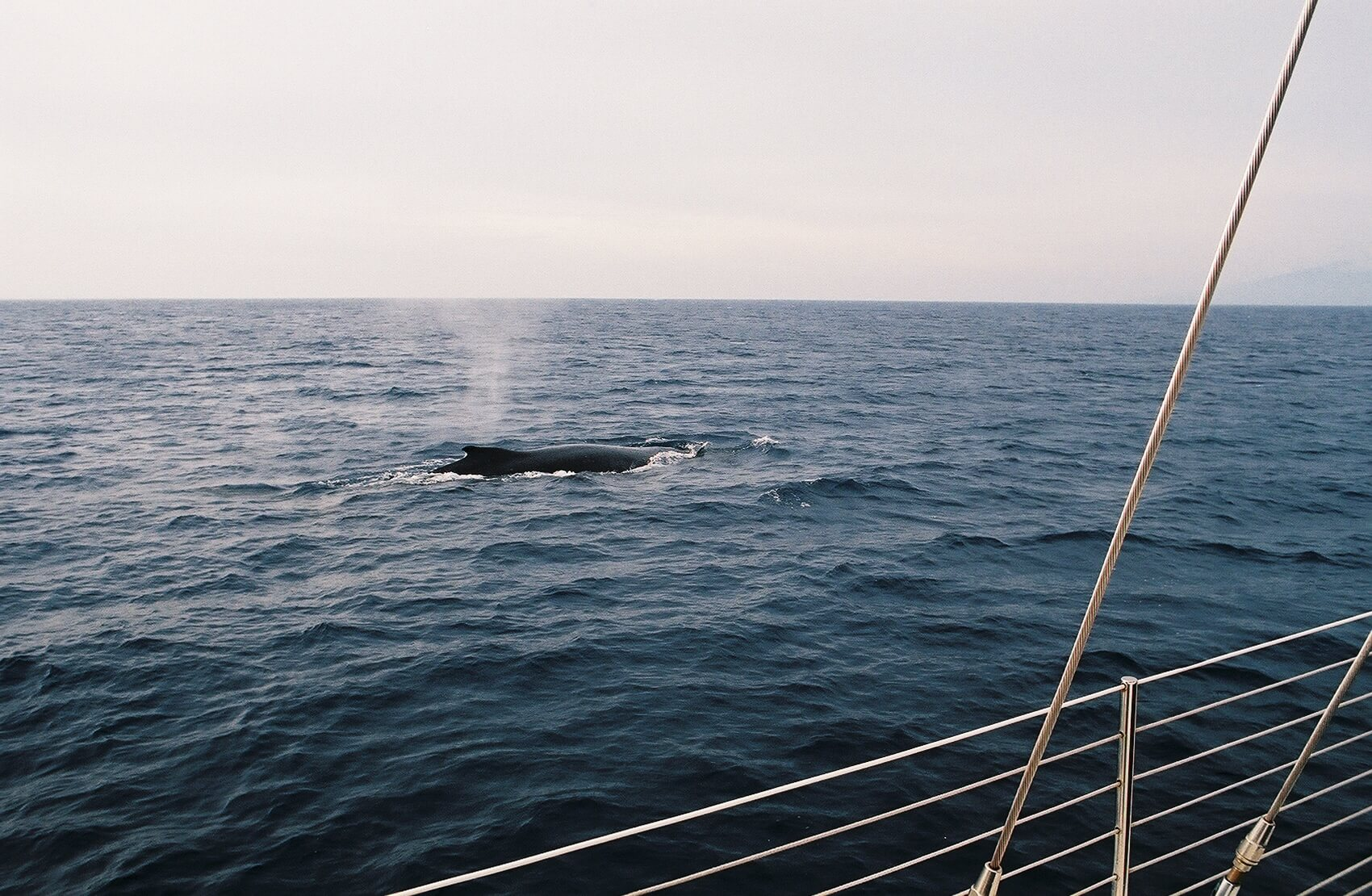 Gemini Whale Watching Tour in Maui shot by Ryan Hines