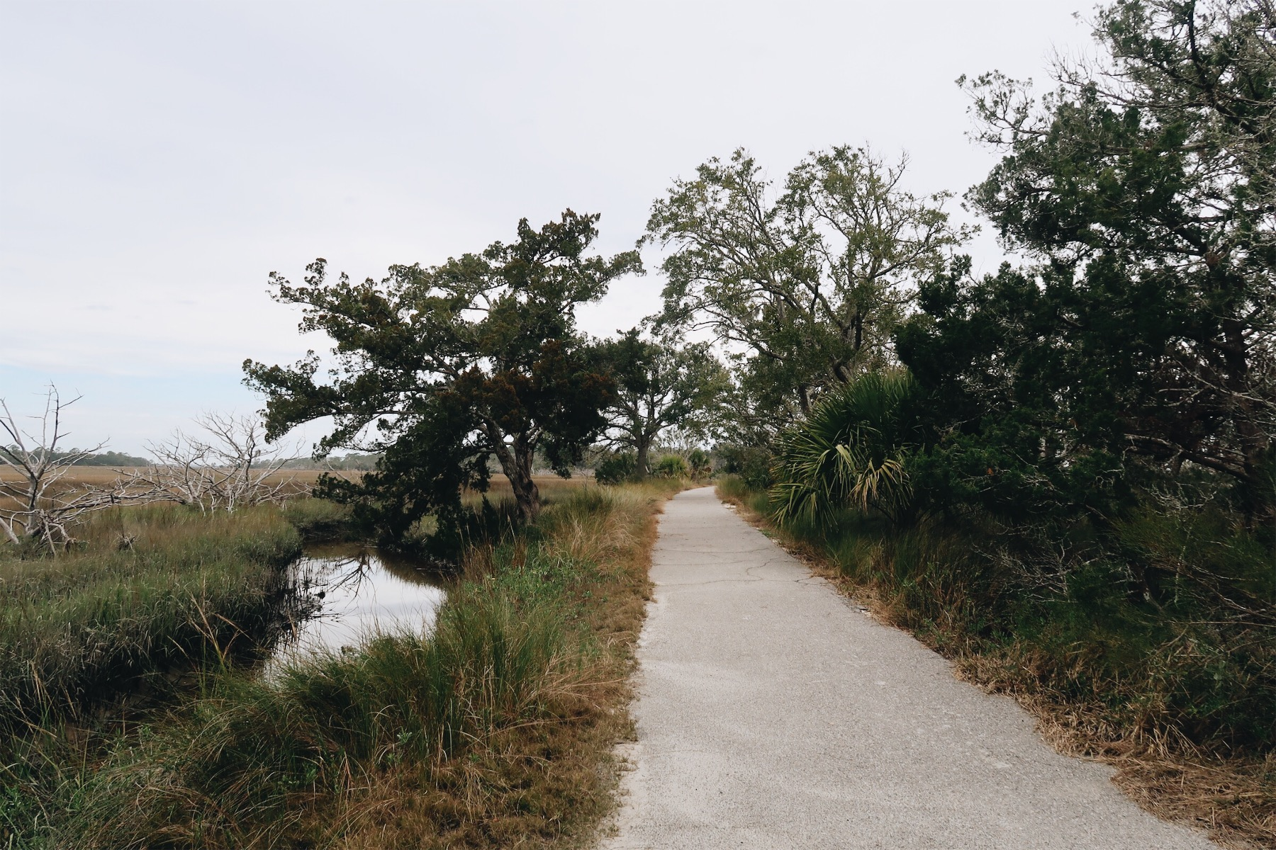 Jekyll Island Bike Path near Driftwood Beach