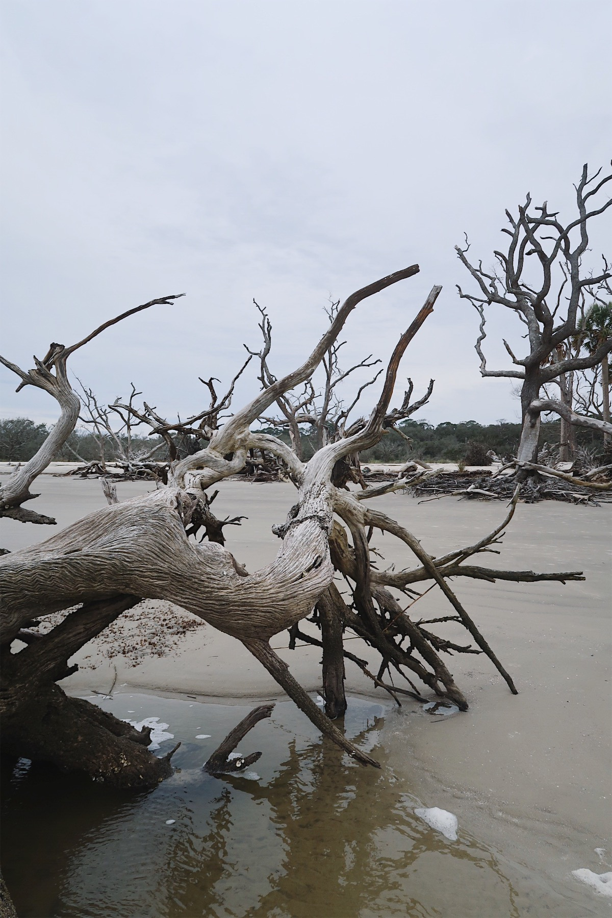 Driftwood Beach Jekyll Island, Georgia