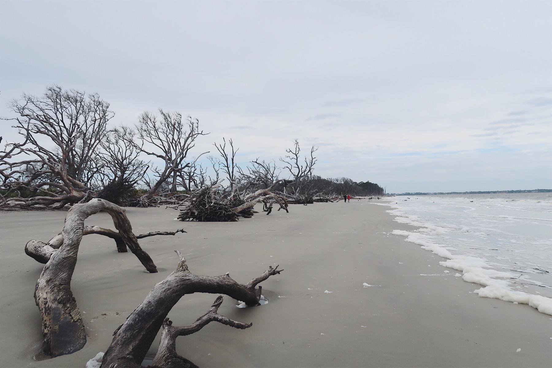 driftwood-beach-3.jpg