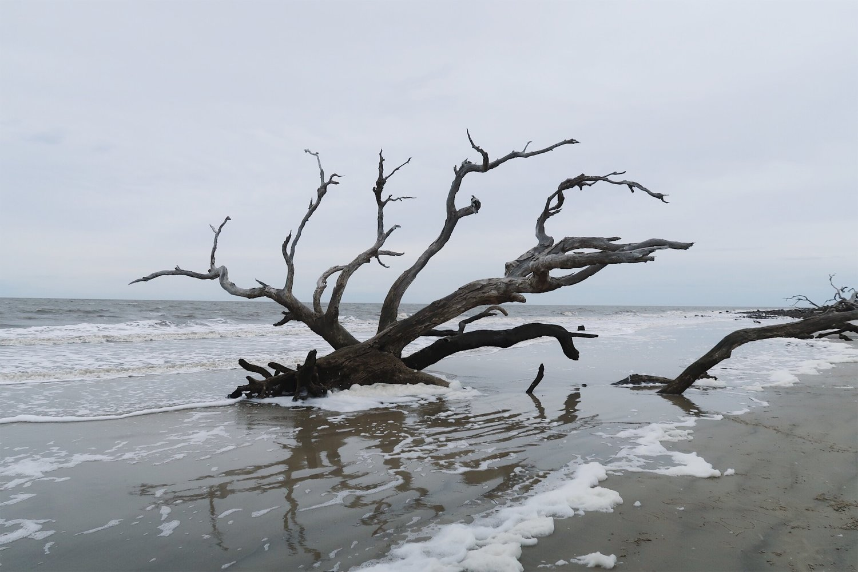 Nearby Driftwood Beach on Jekyll Island