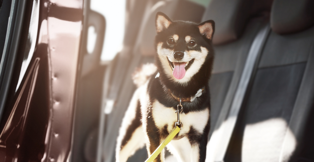 5 Things to Know When Traveling with a Pet -