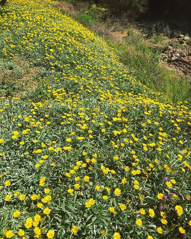 Flowers on my mind 🌿🌼#valleyofthemoon #ojai #flowerpower #mothernature