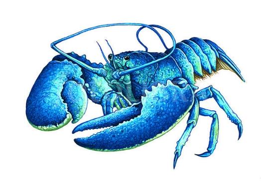 41967-lobster-illustration.jpeg