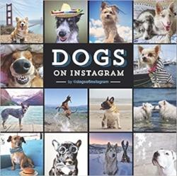 Wenn Sie Hunde auf Instagram süß finden, dann interessieren Sie sich doch bestimmt auch für ausgefeilte Schlacht-Techniken? #irgendwasmittieren