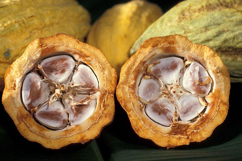 800px-cacao-pod-k4636-14.jpg