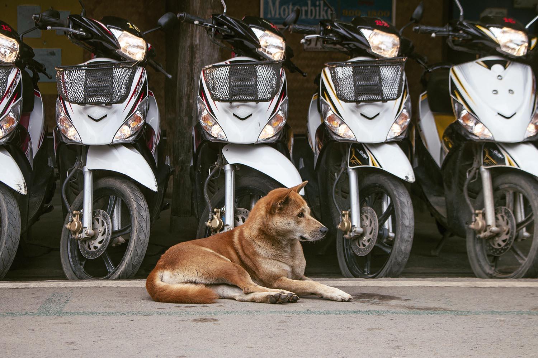 pai_streetdog_motorbike