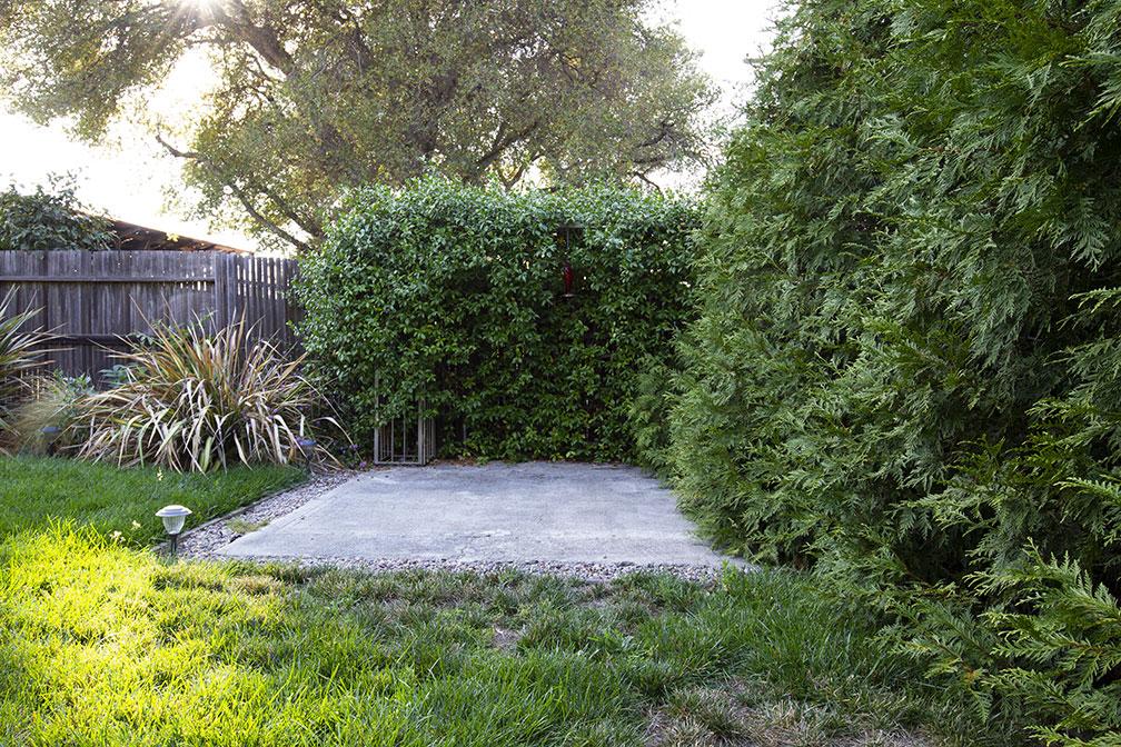 Overgrown01.jpg