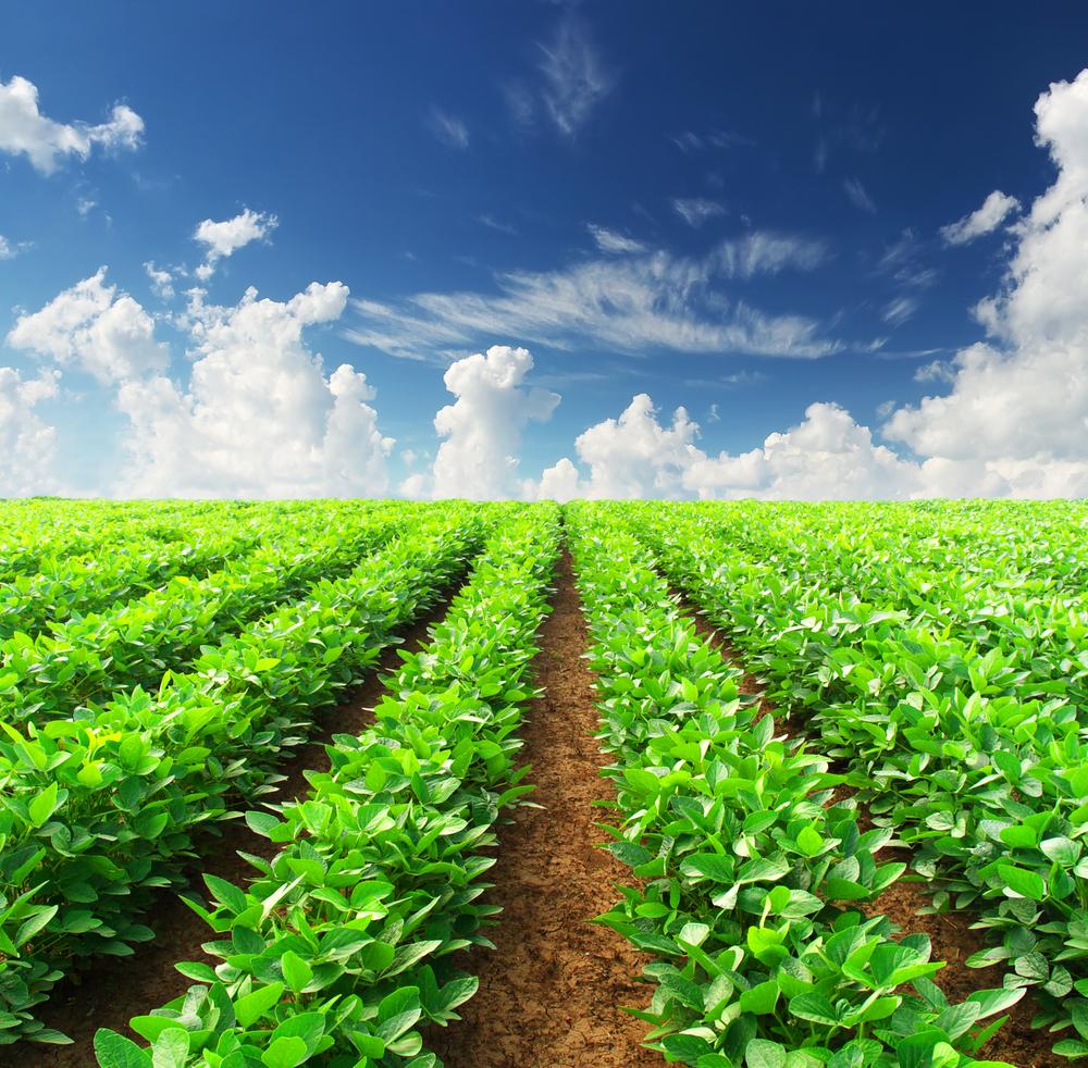 original_agriculture-of-brazil-estancia-churrascaria.jpg
