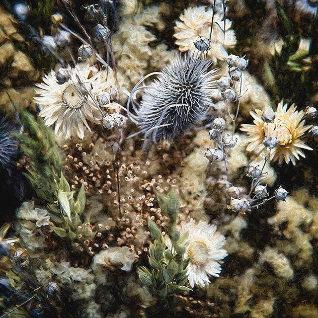 Everywhere I wander... #morganjanemillerphotography #wildflowers
