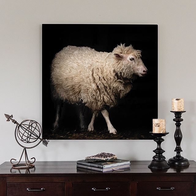 Getting the sheep printed and up. I love this one! #morganjanemillerphotography #sheep