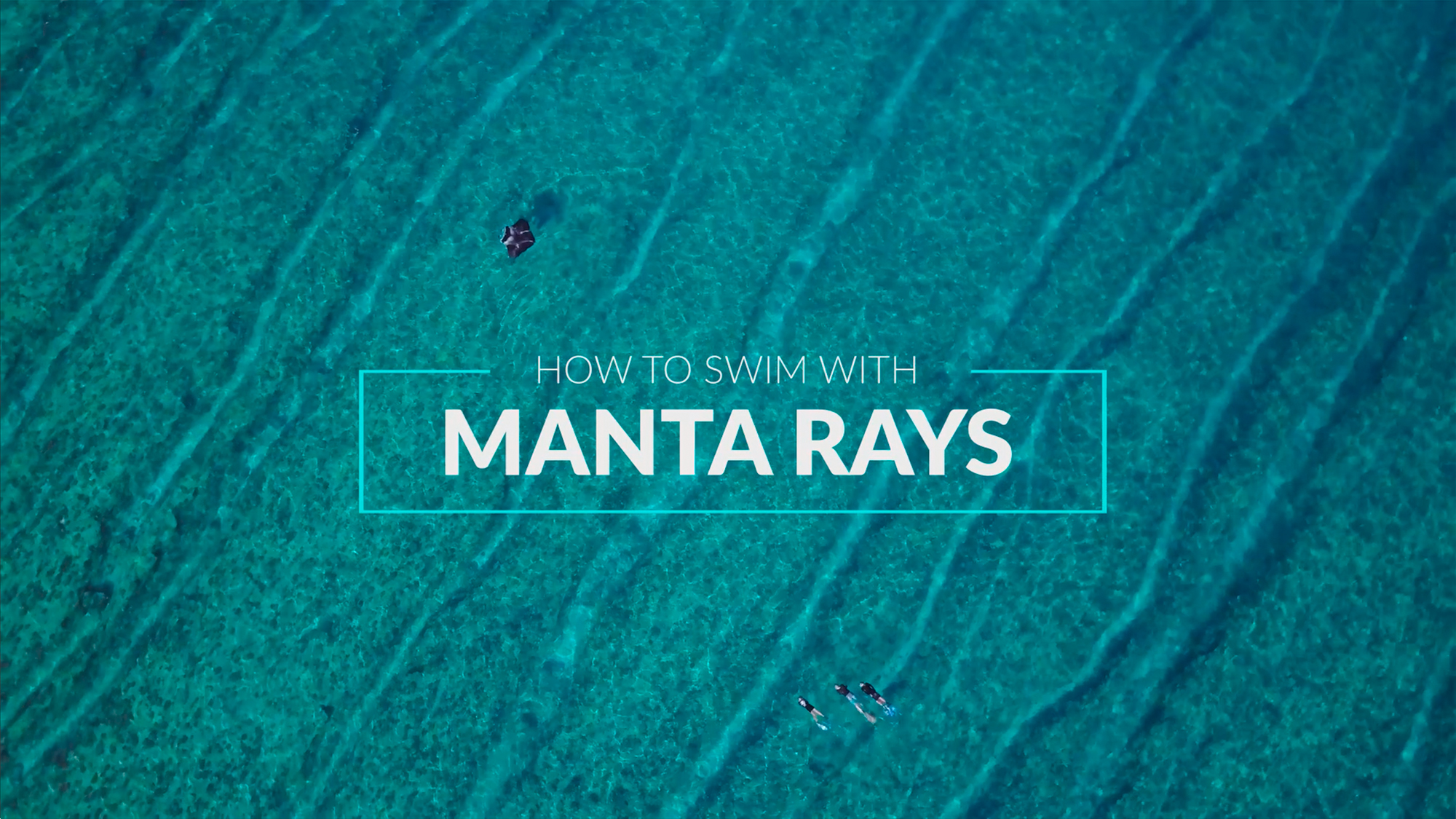 How to Swim with Mantas_English Version_Website Thumbnail.jpg