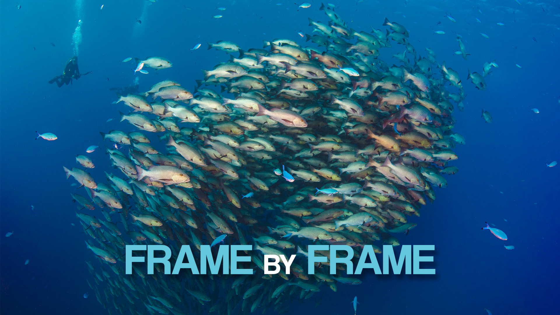 Frame by Frame_Vimeo Cover Image.png