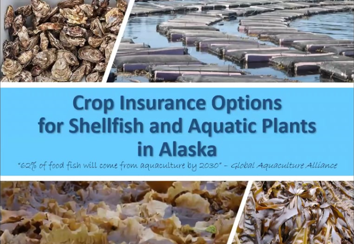AK Ag Risk Series 4: Crop Insurance Options for Shellfish and Aquatic Plants in Alaska -